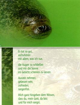 Seehund - Auszeit