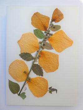 """3er Set Blüten-Faltkarten """"Blütenblätter-Reigen"""" BFP6"""