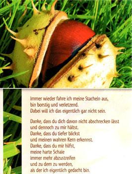 Große Postkarte: Kastanie - meine Stacheln
