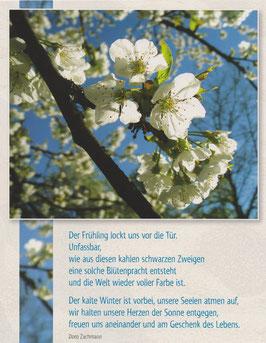 Große Postkarte: Apfelblüte - Der Frühling lockt