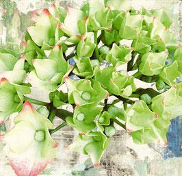 Blumen 0631