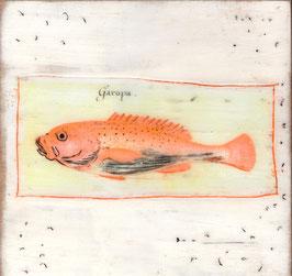 Fische 0720