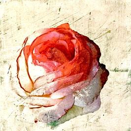 Blumen 0601