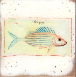 Fische 0714
