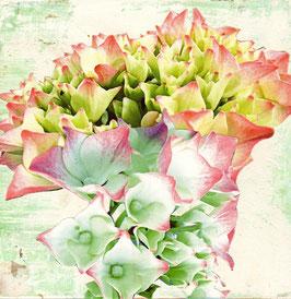 Blumen 0632
