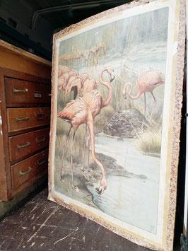 Flamingo poster  |  18.671.O