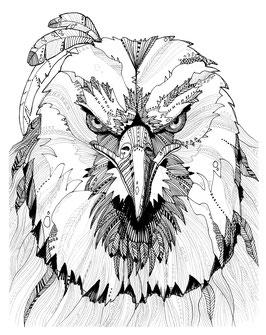 Kunstdruck Adler
