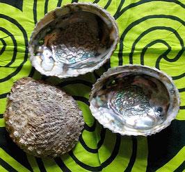 Abalone Muschel (Räuchergefäss)