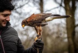 Winterzauber - Greifvogel Spaziergang