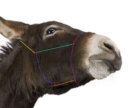 Knotenhalfter für Esel und Maultiere