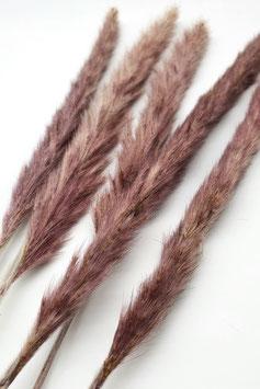 Pampasgras mini purple (5 Stiele)