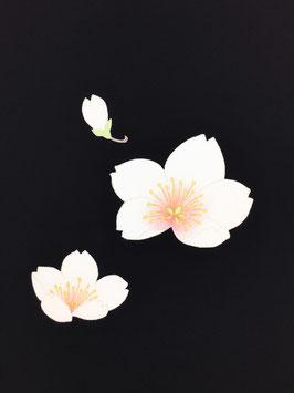 染帯塩瀬黒地桜