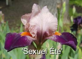 'Sexuel Été'