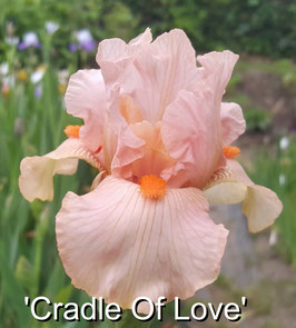'Cradle Of Love'