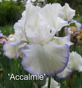 'Accalmie'