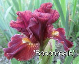 'Boscoreale'