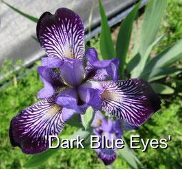 'Dark Blue Eyes'