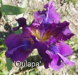 'Oulapa'