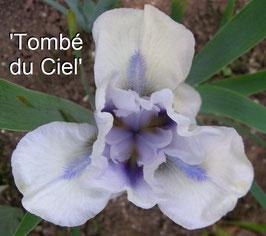 'Tombé Du Ciel' - SDB - SA - 40cm