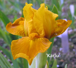 'Karlu'