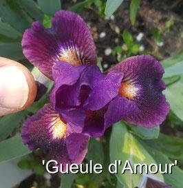 'Gueule d'Amour'
