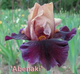'Abenaki' - IB - 60cm
