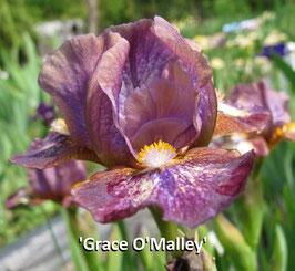 'Grace O'Malley'