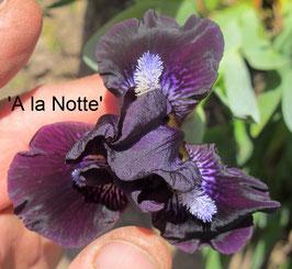 'A la Notte'