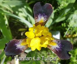 'Fanfan la Tulipe'
