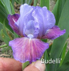'Budelli'