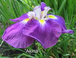 'Akina'