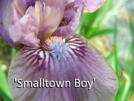 'Smalltown Boy'