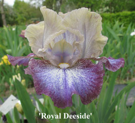 'Royal Deeside'
