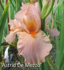 'Astrid De Mezzo'