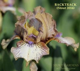 'Backtrack'