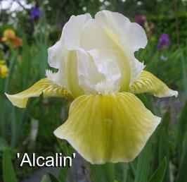 'Alcalin'