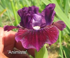 'Animiste'