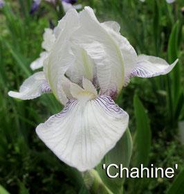 'Chahine'