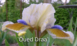 'Oued Draa'