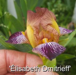 'Élisabeth Dmitrieff