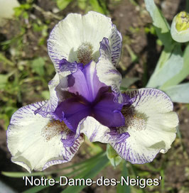 'Notre-Dame-des-Neiges'