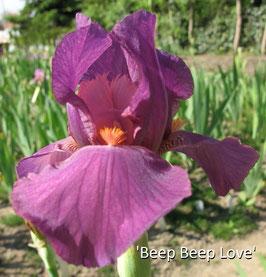 'Beep Beep Love'