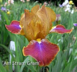 'Am Stram Gram'