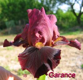 'Garance'