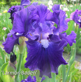 'Larmor-Baden'