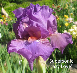 'Supersonic Lazy Love'