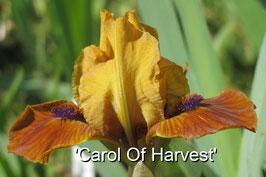 'Carol Of Harvest'