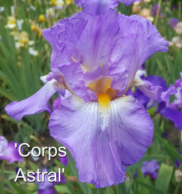'Corps Astral'