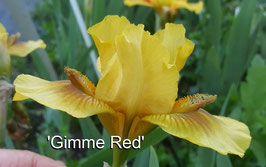 'Gimme Red'