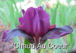 'Chaud Au Coeur'